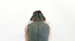 NezaketEkici –Human Cactus (2012), video,dokumentasjon av performance, 4:04 min, videostill av Branka Pavlovic, gjengitt med tillatelse fra kunstneren
